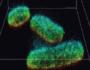 Une nouvelle méthode de microscopie pour observer les mécanismes cellulaires!