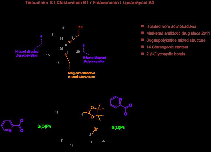 Synthèse Totale de la Tiacumucine B