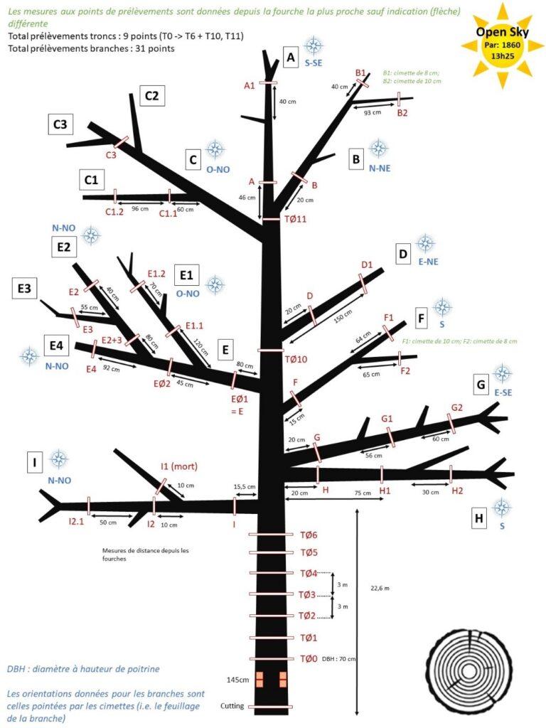 Plan d'échantillonnage Projet TreeD (© Niklas Tysklind & Emeline Houël)