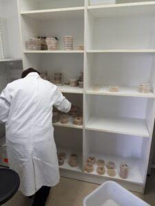 Mise en culture des microorganismes associés à Sextonia Rubra